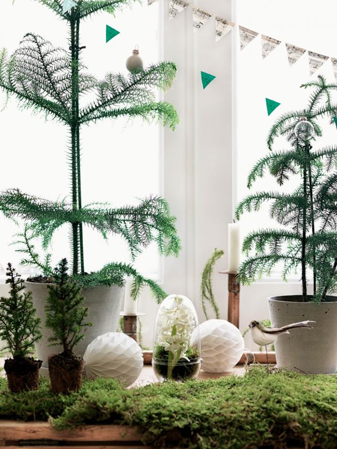 christmas_plants