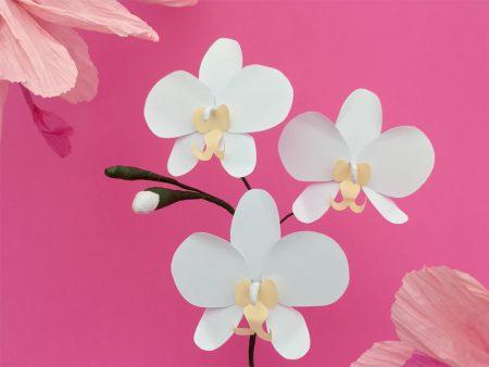 DIY: Des orchidées papillons en papier