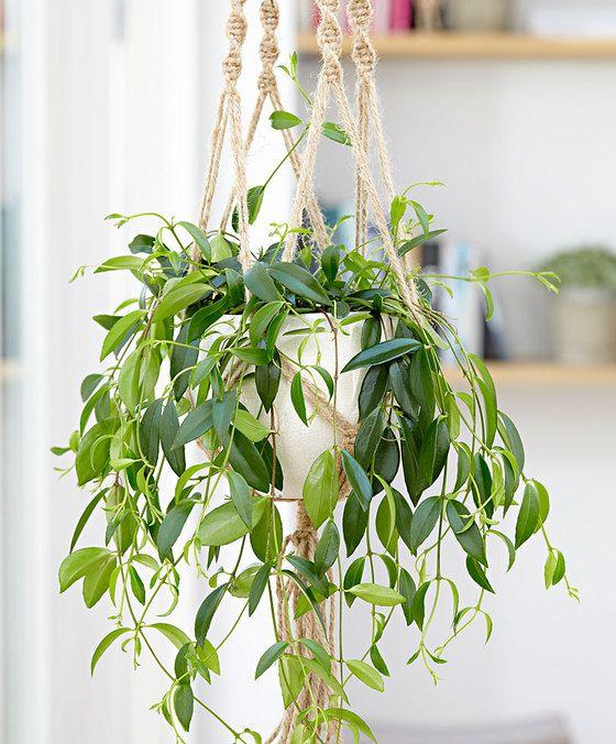 plantes, plants, deco