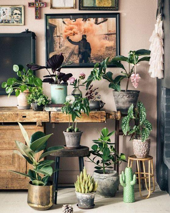 plantes, inspiration, déco, appartement