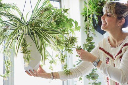 Un décor Hygge avec des plantes suspendues