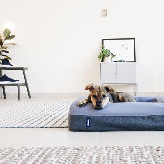 7 Astuces Pour Cohabiter Avec Nos Animaux Interior Design