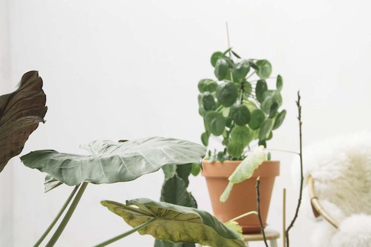 eviter de tuer ses plantes-2