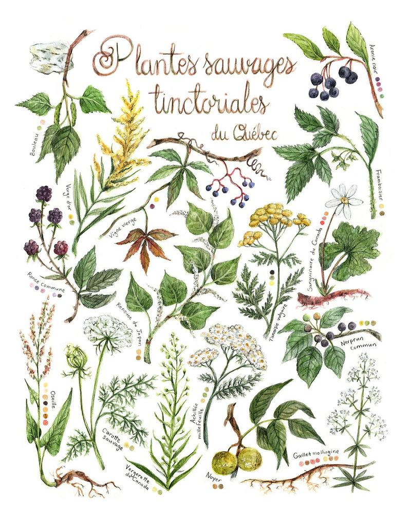 Mathilde Cinq-Mars, Illustrations, plantes sauvages, etsy